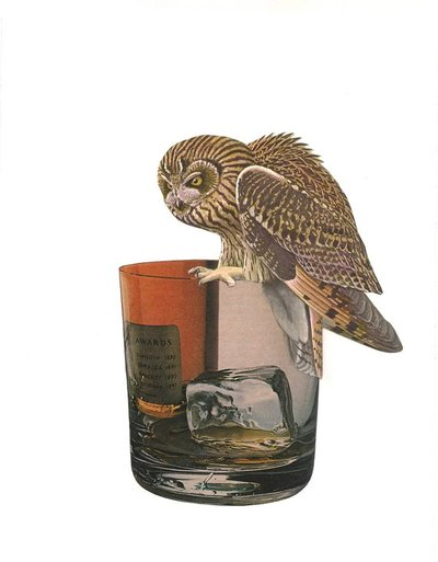 Maureen Shields - Owl on Low Ball Glass Archival Print - California - Birds -Card - Wine Country, Wine, Shop Local Wine Country, Viansa Vineyard, Red Wine, White Wine, Rose, Vineyard, North Cay California Wines, Viansa