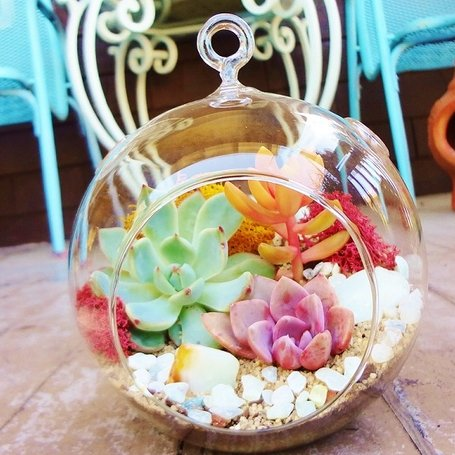 Sunshine and Succulents Terrariums Workshops Brandi Chalker SFetsy Team
