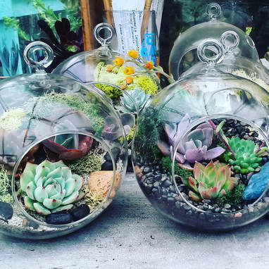 Succulent Terrariums - Sunshine and Succulents - Brandi Chalker - Cactus - Plants - SFetsy - Craftcation